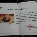 Santorini adoption certificate